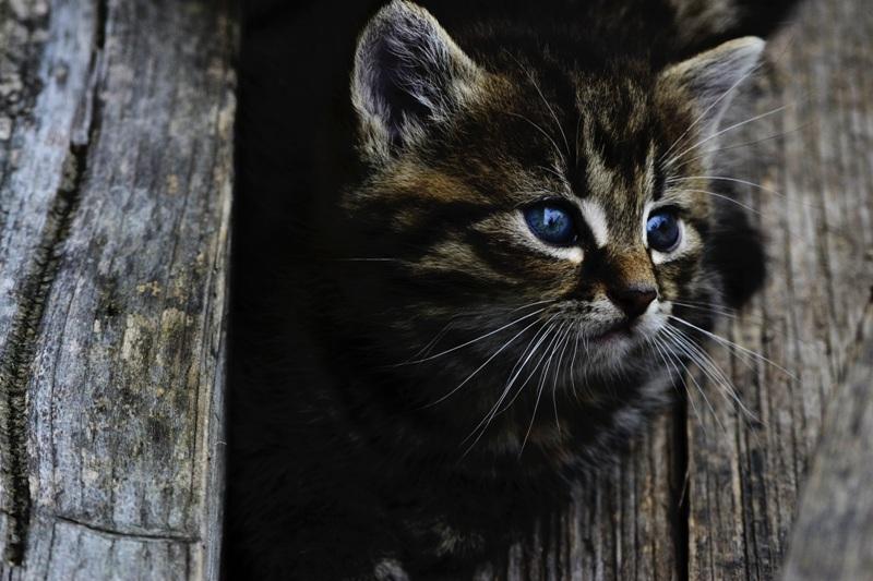 cuidado del gatito