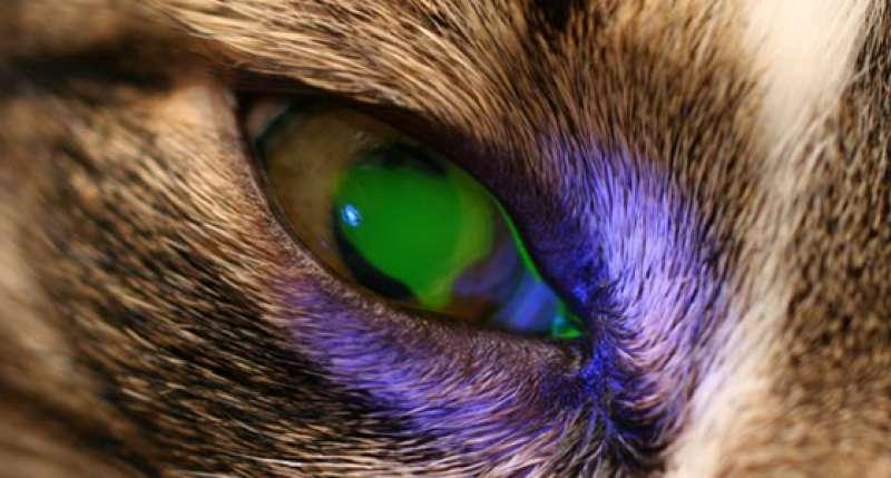 úlcera corneal fluoresceína positivo azul cobalto