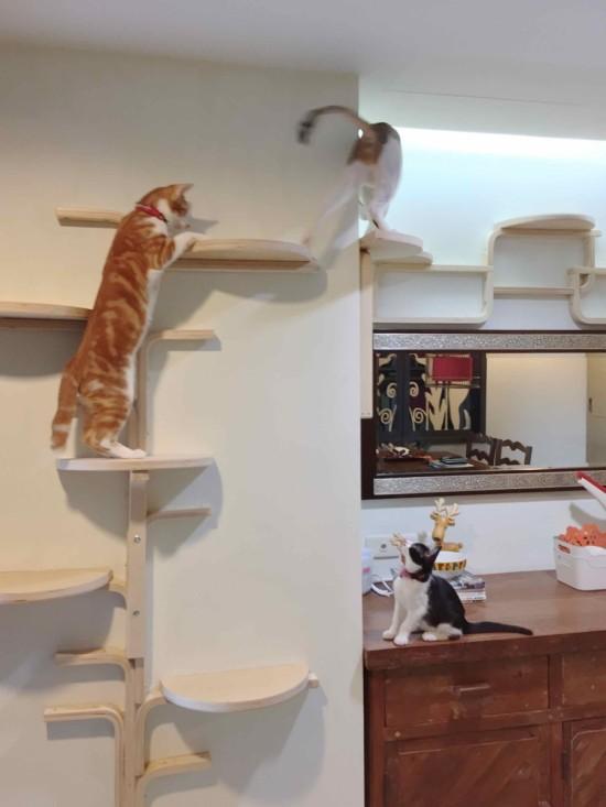 enrequecimiento hambiental felino