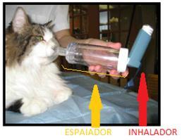 gato con inhalador, enfermedad bronquial felina