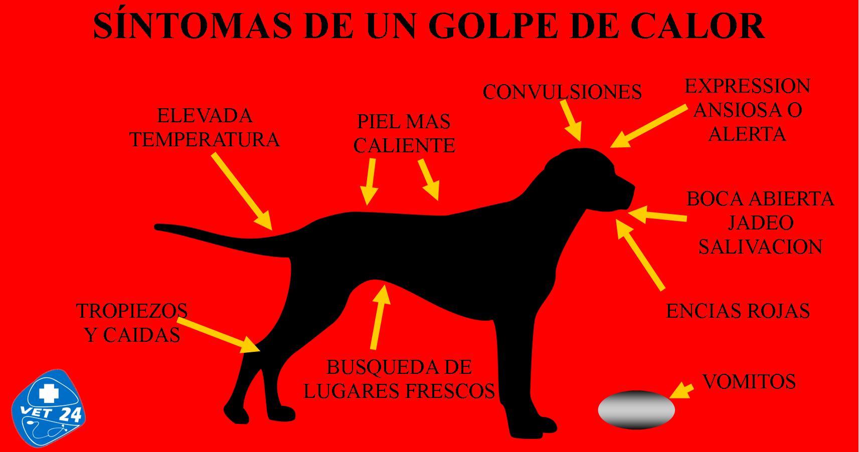 los sintomas del golpe de calor en el perro