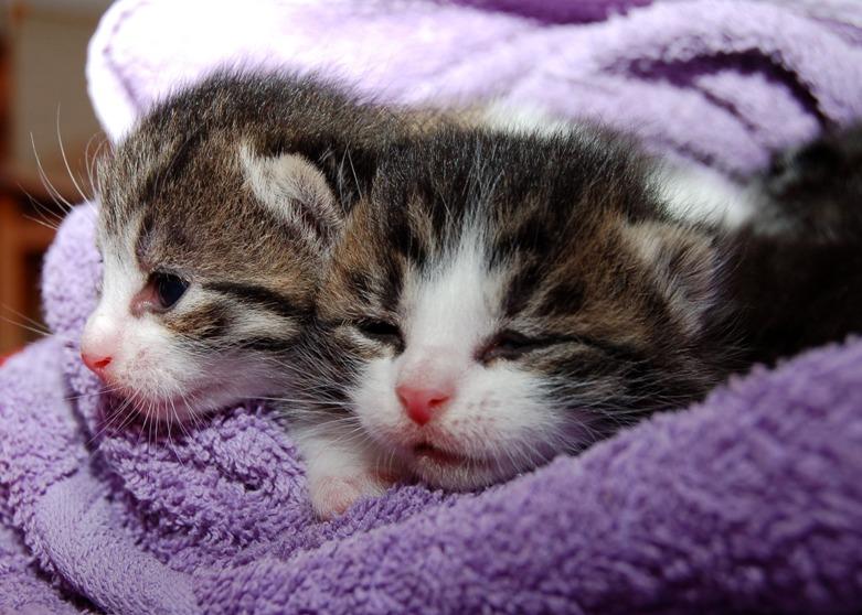 gatitos-gatos-hospitalveterinariovet24-veterinario24h