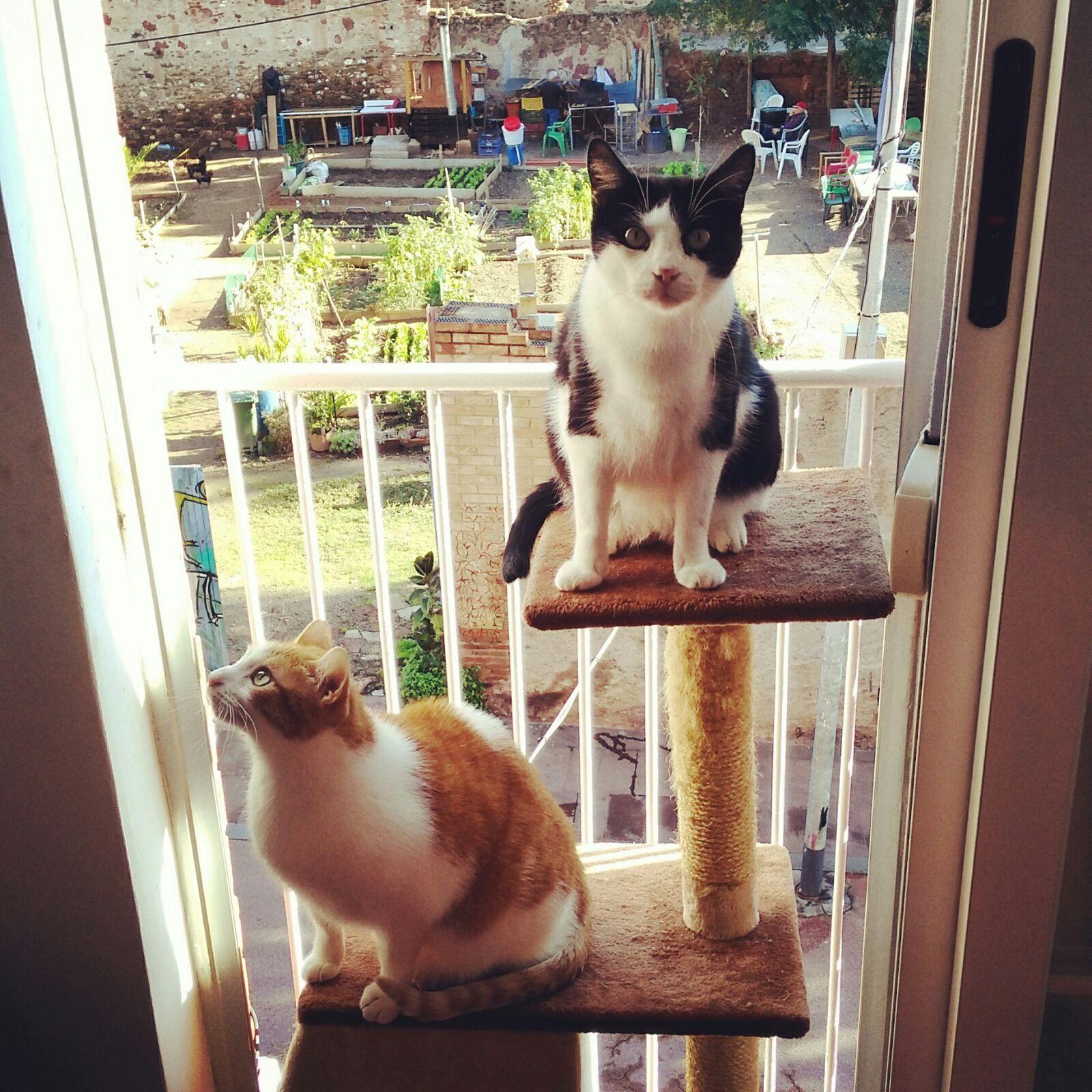 Enrequecimiento ambiental felino rascador sencillo