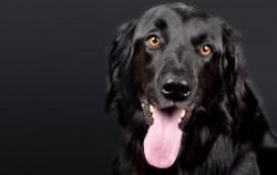 epilepsia perro convulsiones ataques epilepsia genetica idiopatica