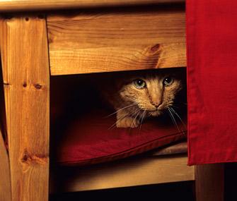 fobia petardos fuegos artificiales miedo gato escondido terror