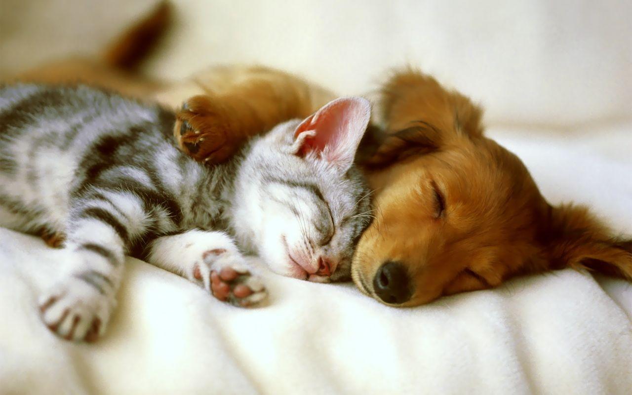 pulgas perro y gatito amigos