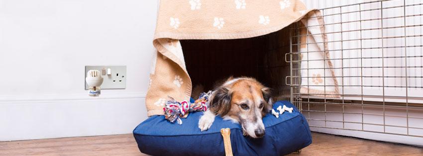 fobia perro zona segura san juan