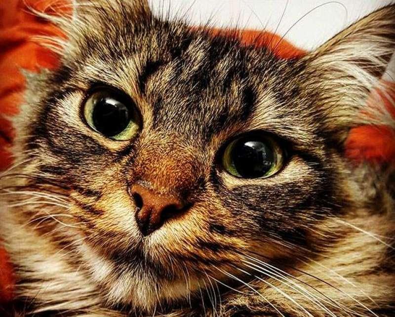 hospitalveterinarivet24-fiv-inumodeficiencia-felina-medicina-felina