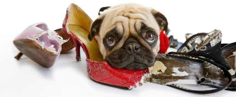 FP_Dog-Shoe
